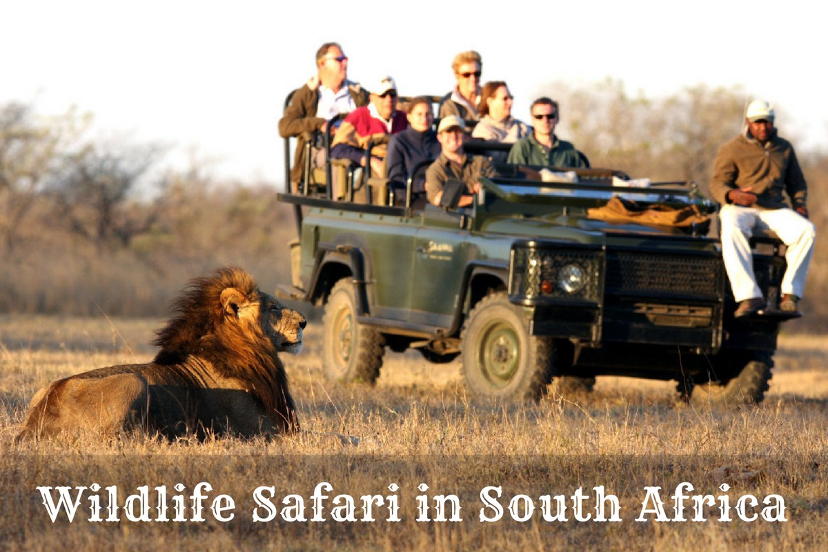 Wildlife Safari In The Southern Parts Of Africa | by Africa Safari | Medium