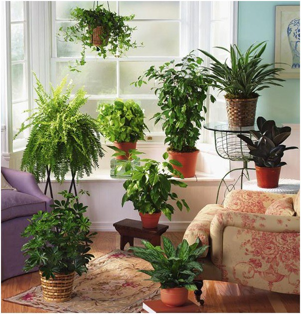 Top 10 Mosquito Repellent Plants for Your Home Garden