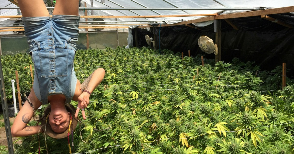 The Grueling But Lucrative Life Of A Nomadic Marijuana Trimmer