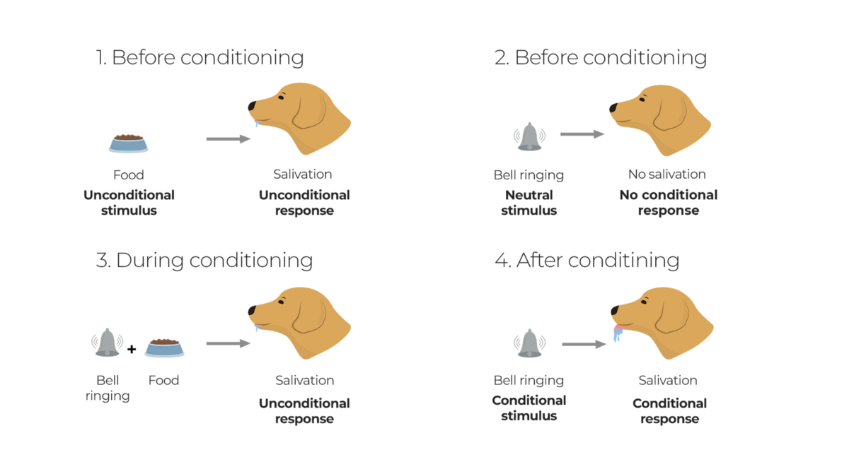 Reinforcement Learning, Brain, and Psychology: Classical and Instrumental Conditioning