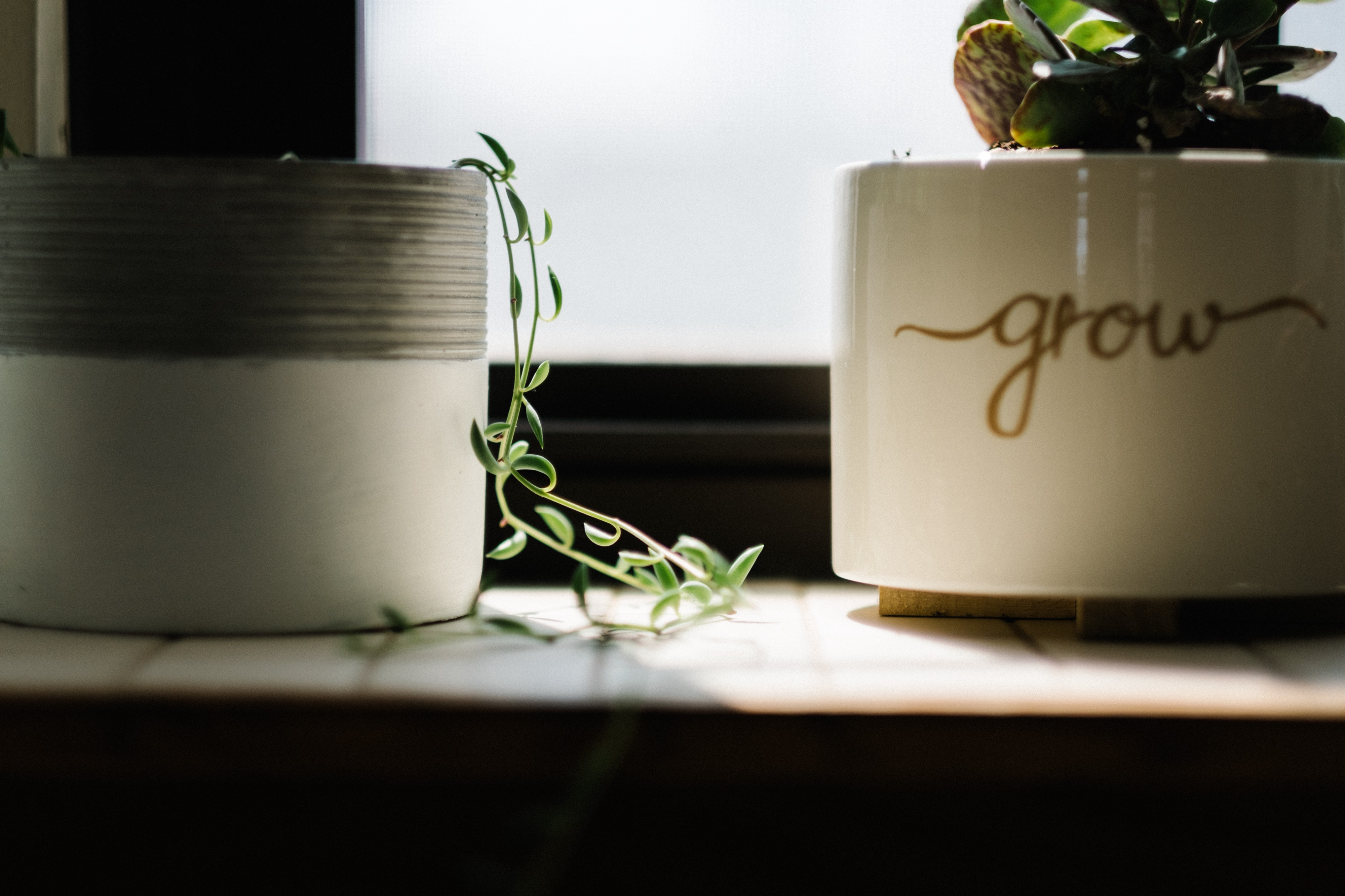 "Two pots with plants on a windowsill. Small plant growing out of its pot, into the daylight. Text on right plant pot: ""grow"""