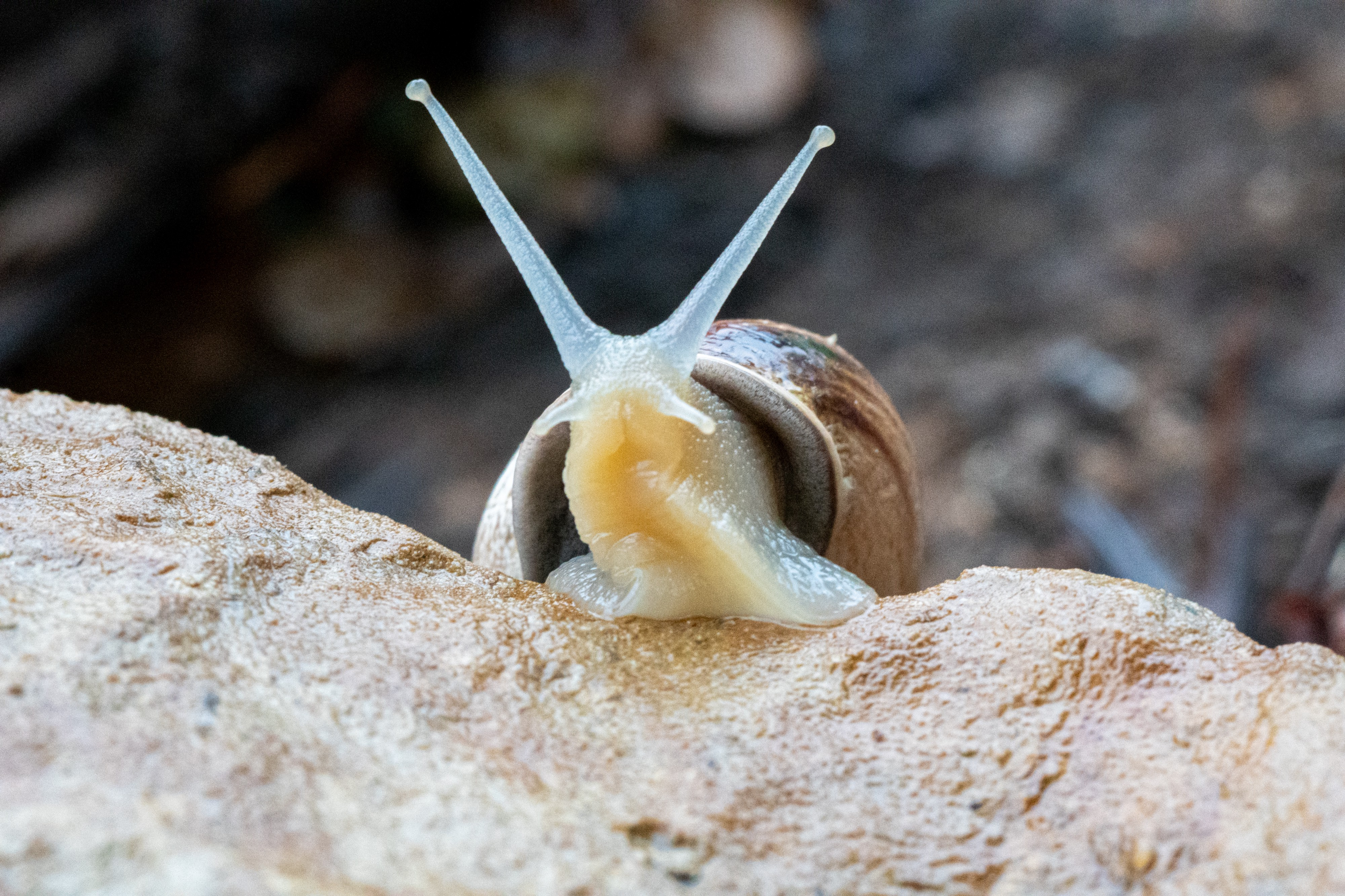 cute little snail looking out at the world of writers and artists hopefully