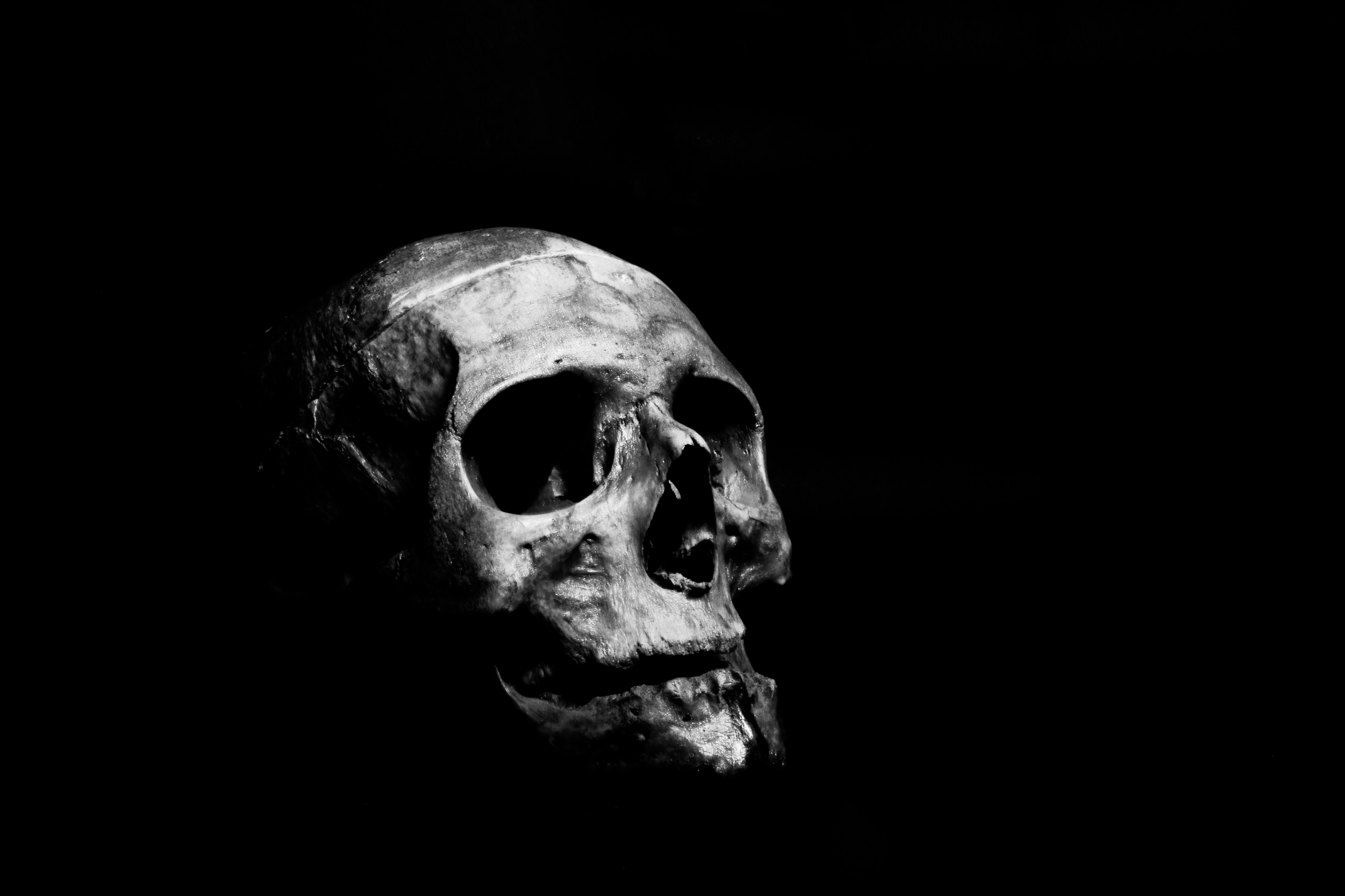 An image of a skull, shown in black and white, with a black background.