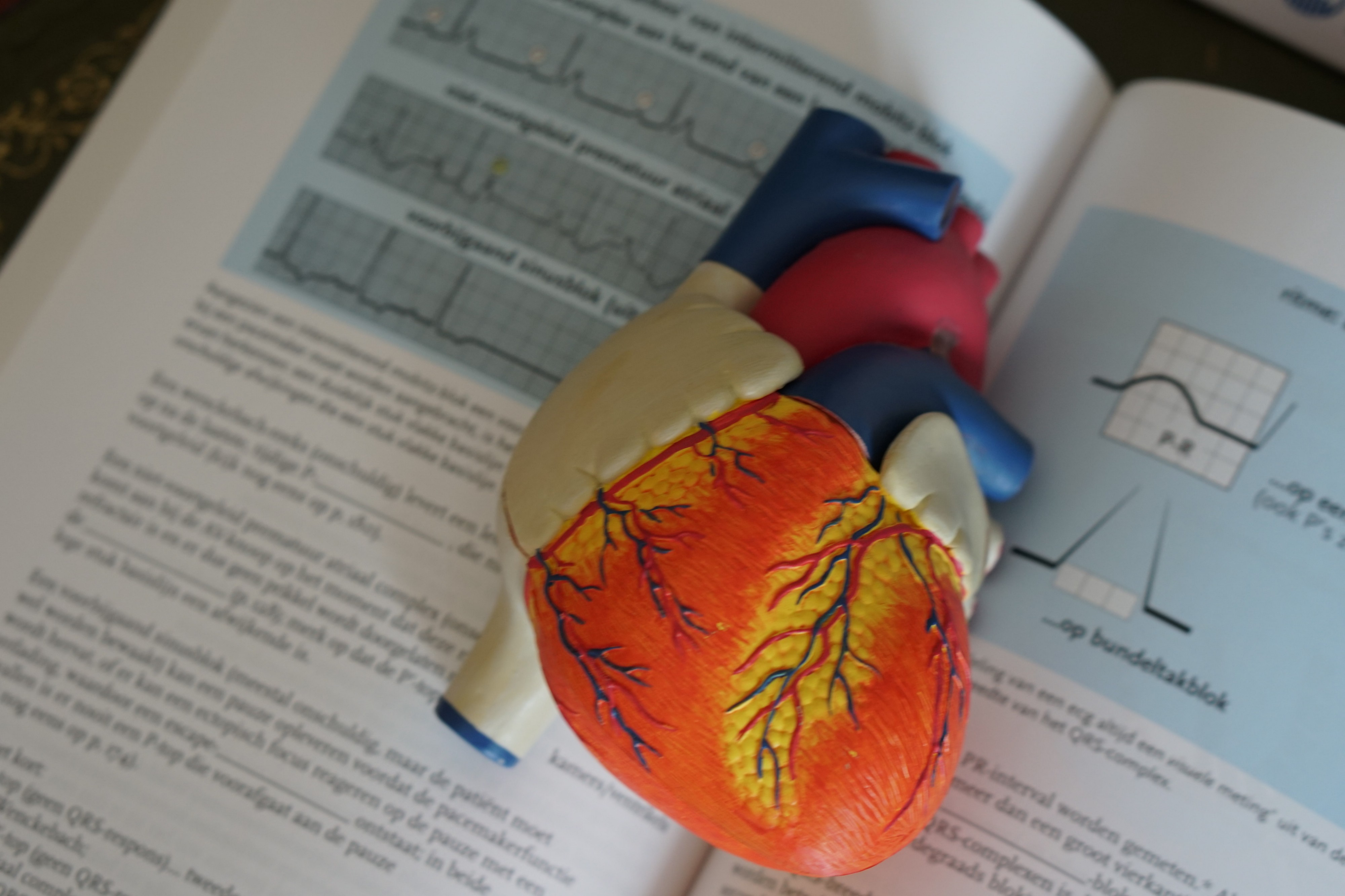 Model of a human heart over a medical textbook