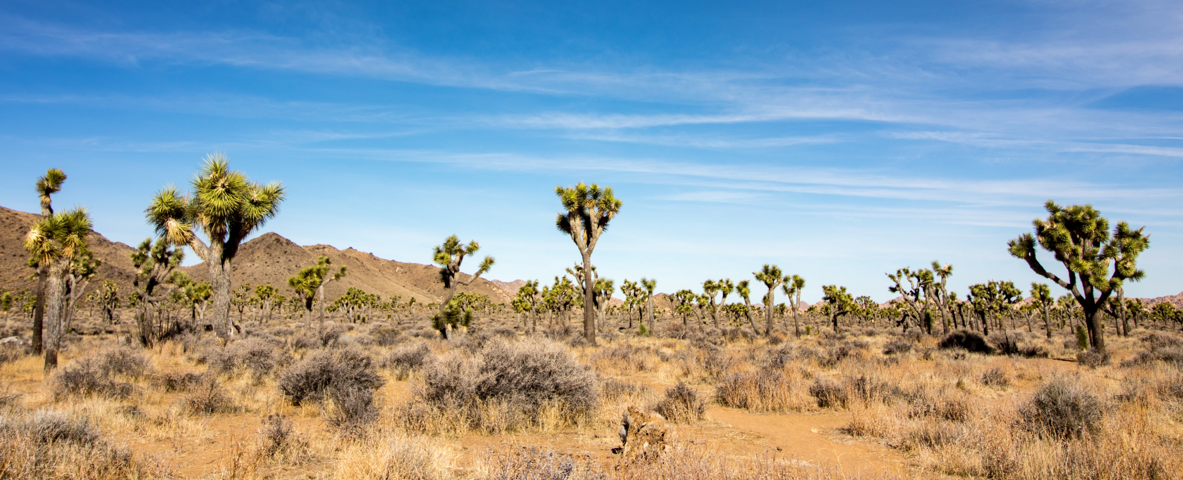 Joshua Tree National Park The Value Of Good Campground Mates