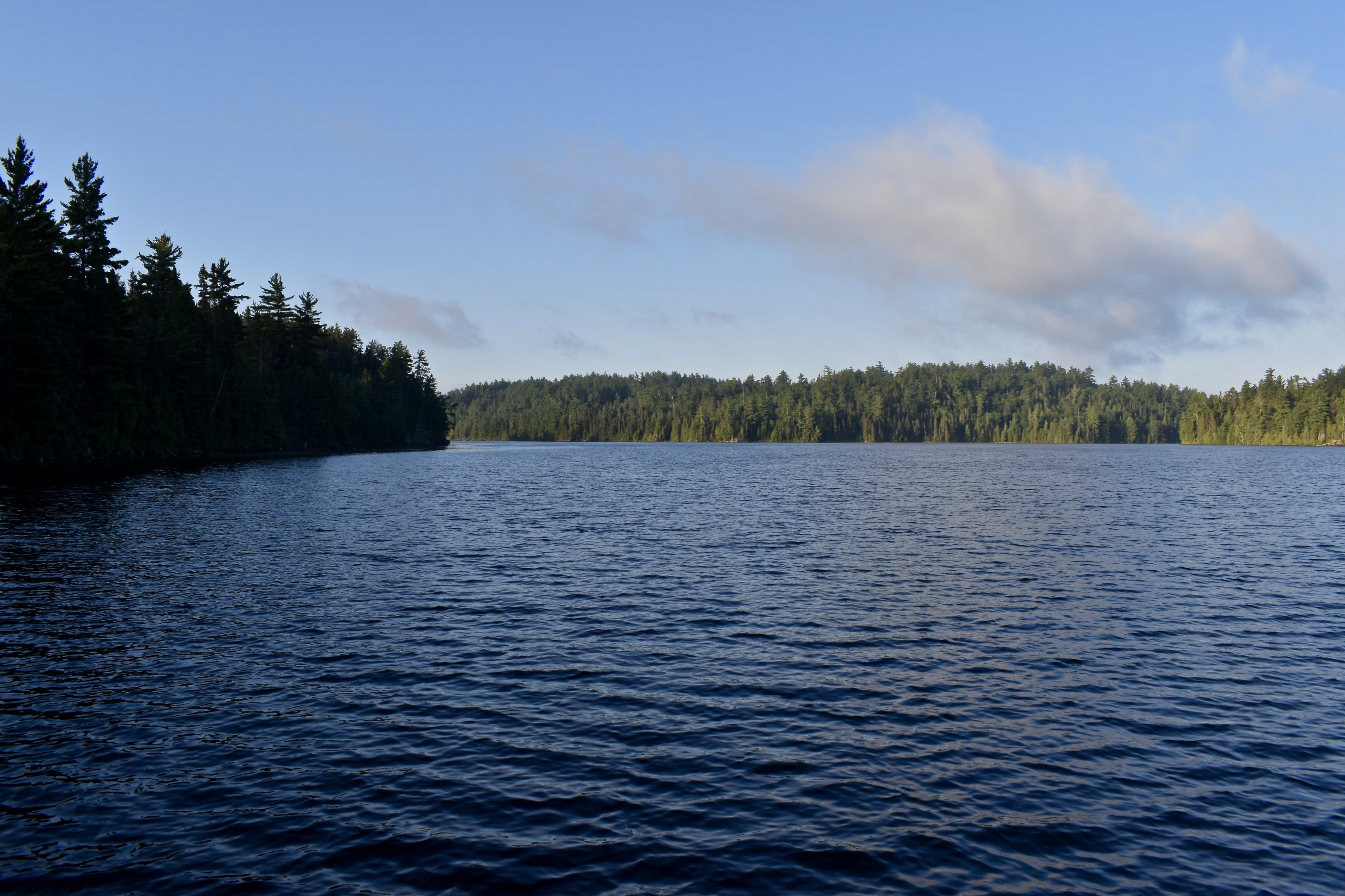 A calm lake with gentle waves, with an evergreen-covered island in the distance and a sheer wall of evergreens on the left.