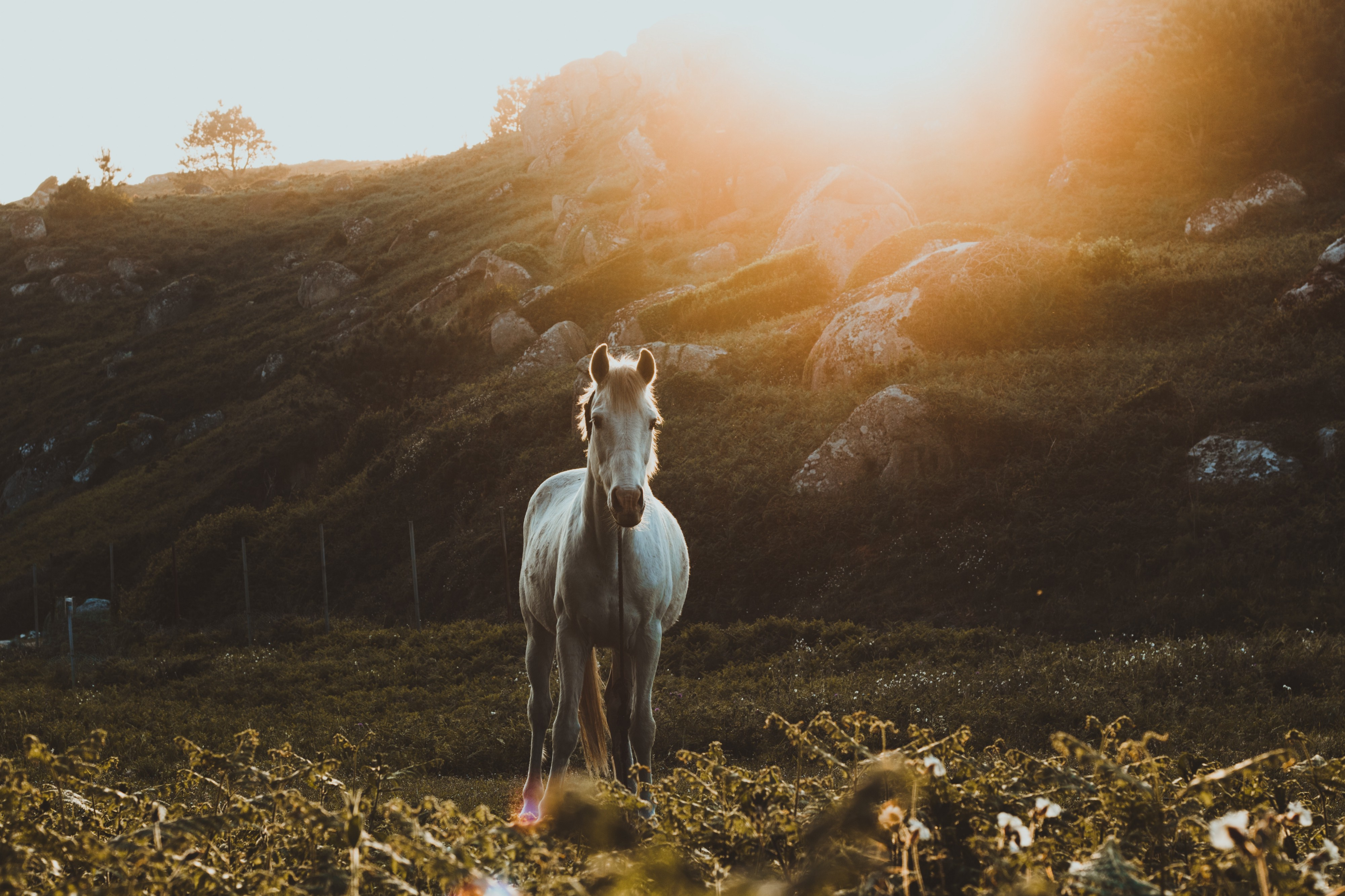 The Parable Of The Old Man And The White Horse By Zach Arend Live Your Life On Purpose Medium