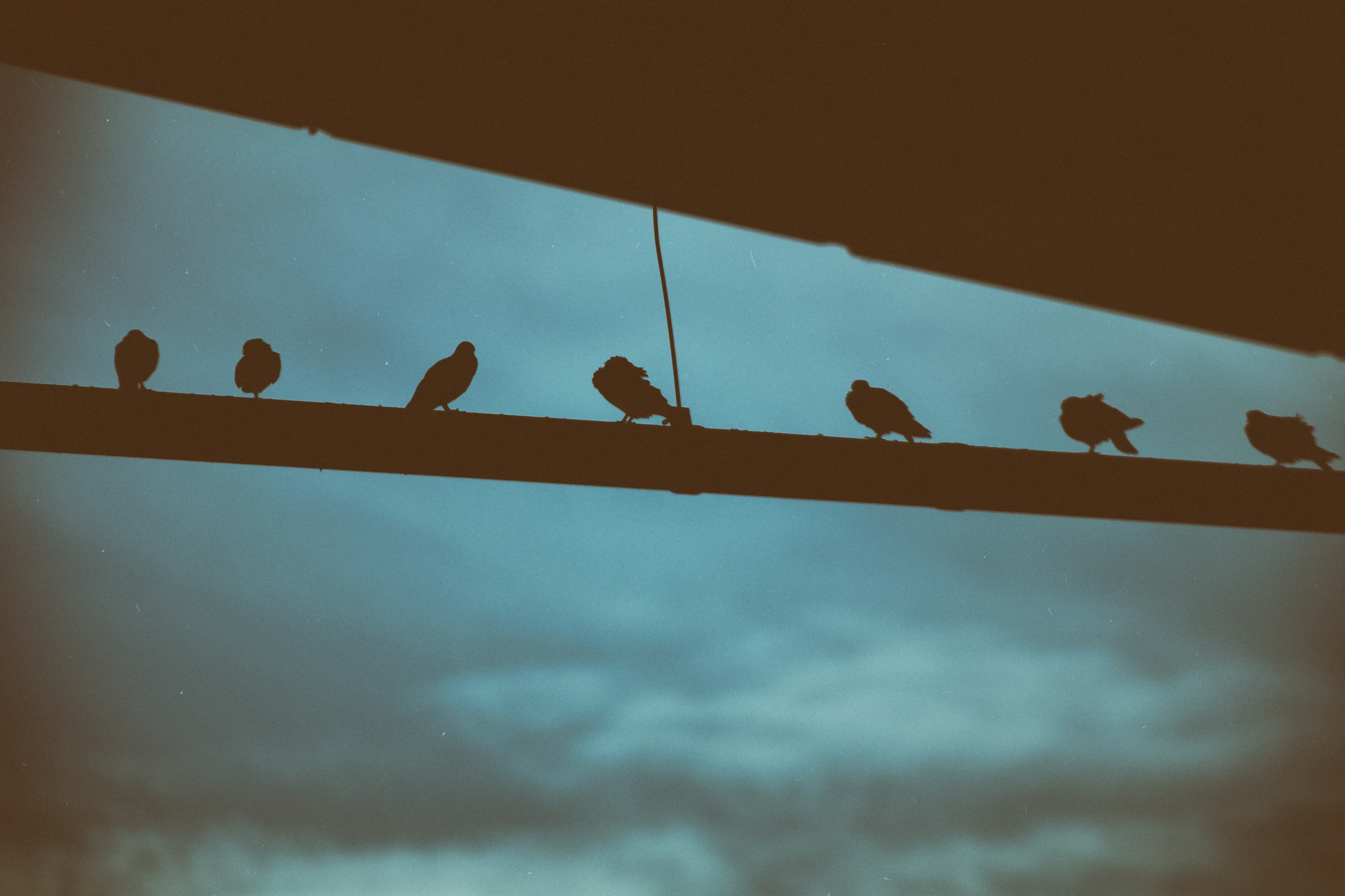 group of birds sitting together in a line against a stormy backdrop