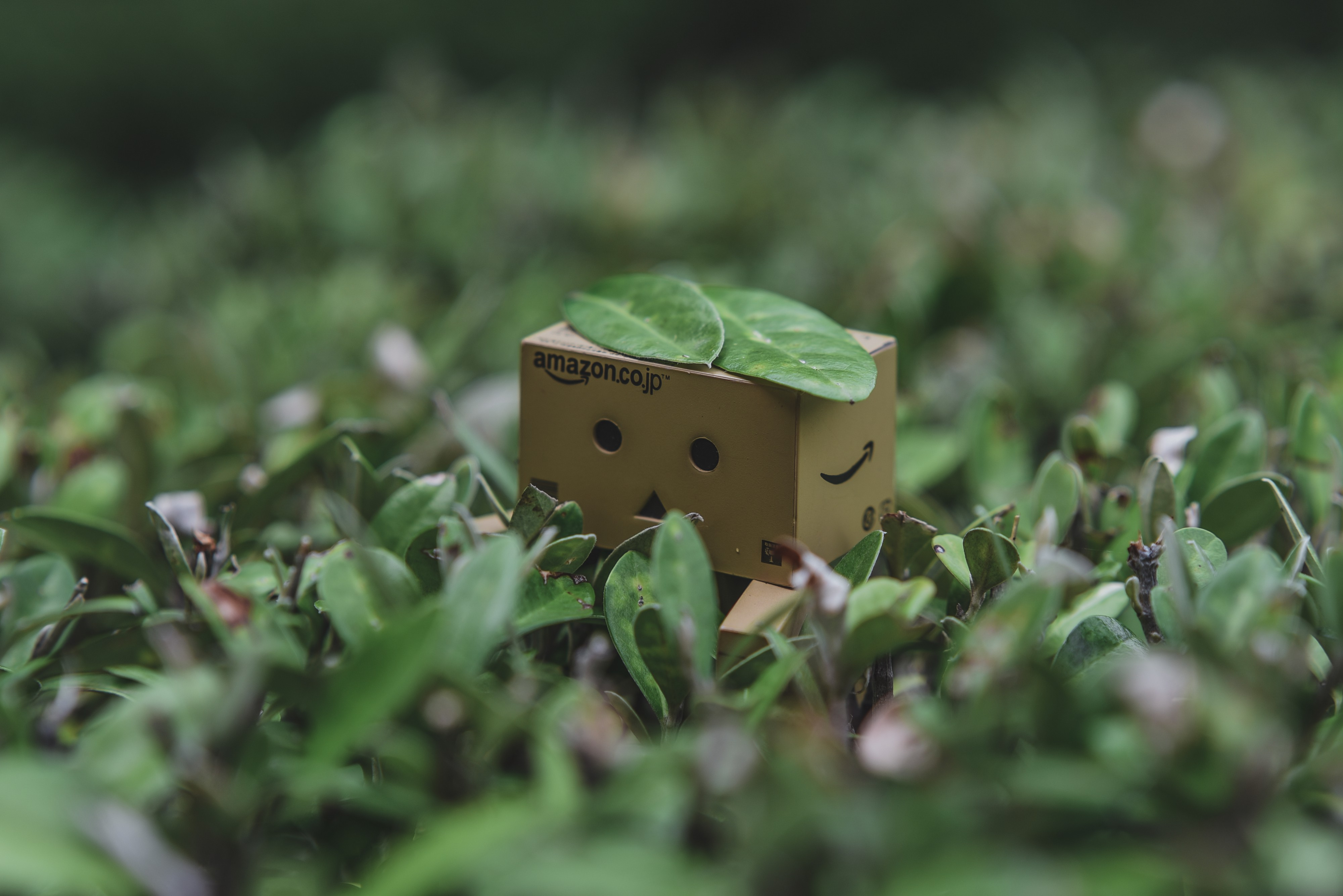 A small cardboard cut-out, with Amazon sign on the front and logo on the side, in the middle of a green meadow with one little green leaf sitting on top of it.