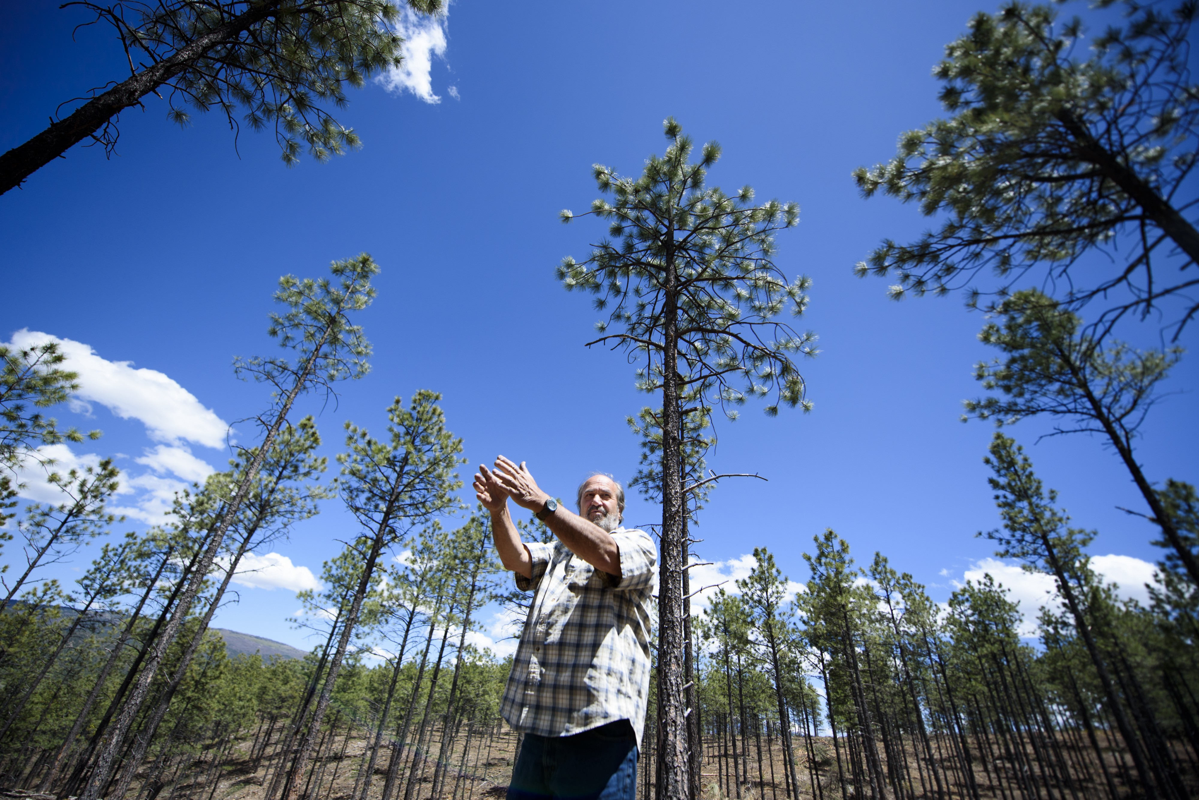 Can cutting down trees protect New Mexico's water? - Small