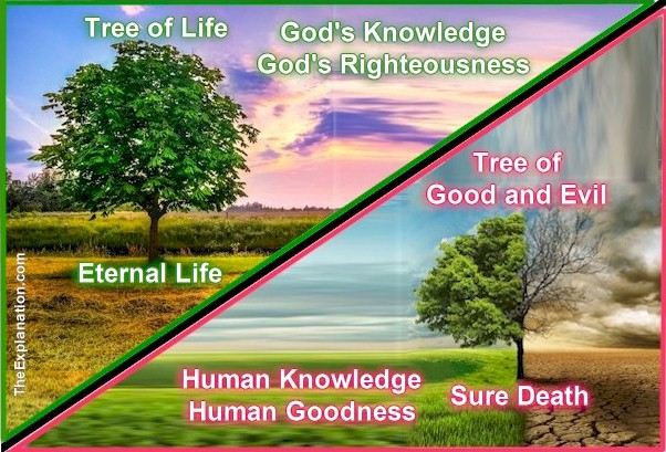 The Tree of the Knowledge of Good and Evil leads to sure Death. The Tree of Life leads to Eternal Life.