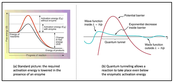 Left: The classical view on activation energy and enzymes in chemical reactions. Right: the concept of quantum tunneling.