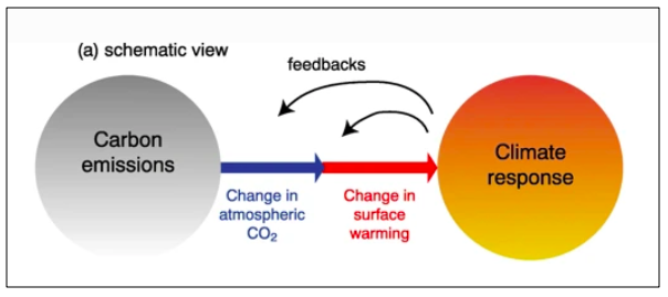 Schematic view of a climate-carbon cycle feedback.