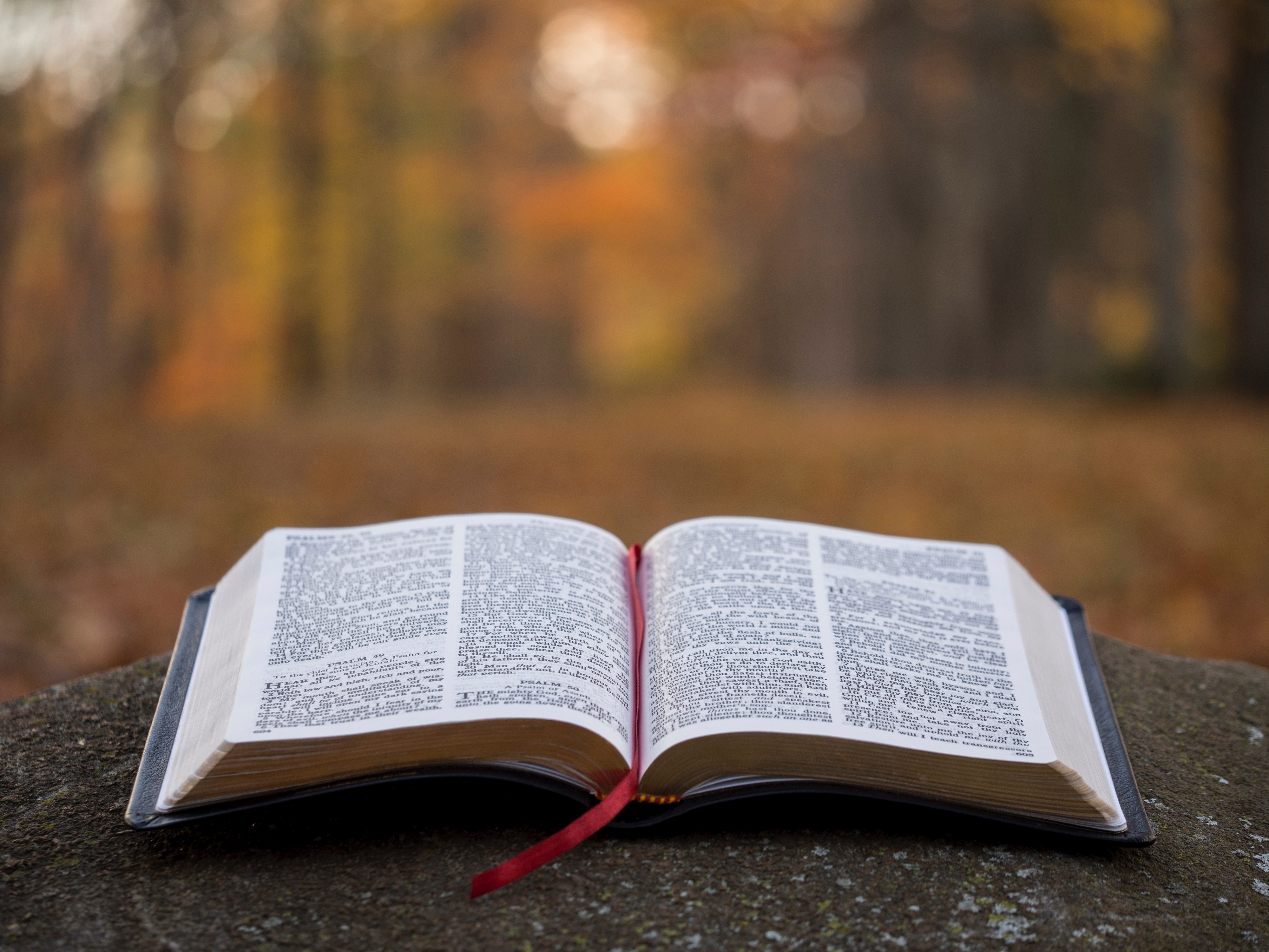 How To Read the Bible For All It's Worth - Publishous - Medium