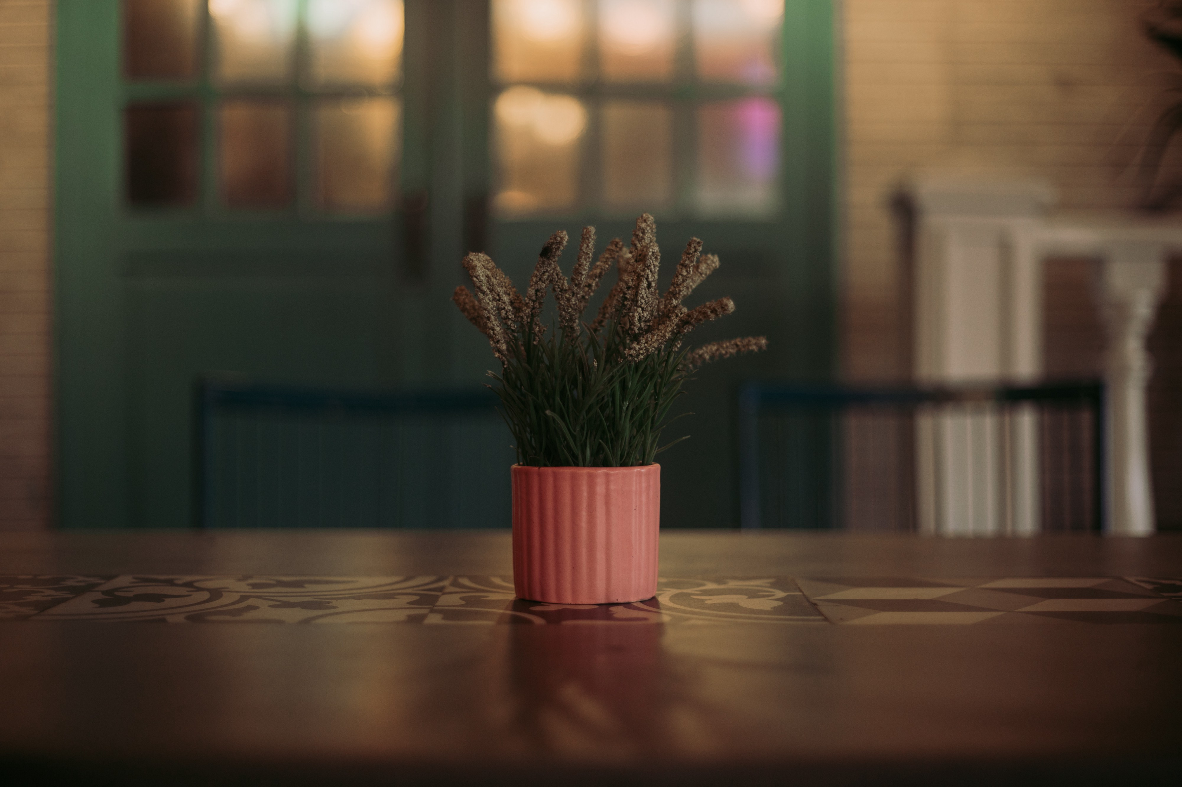 A small plant on a oak table top