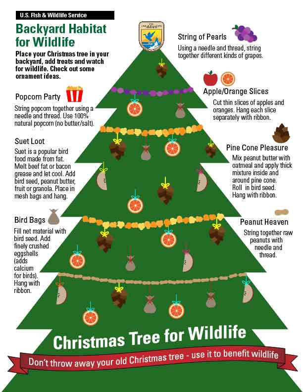 Christmas Tree Food.Recycling Christmas Trees For Wildlife Updates From The