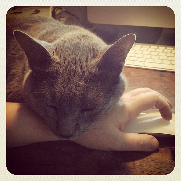 Photo of a gray cat with his head resting firmly on the wrist of a hand gripping a computer mouse, his eyes closed peacefully