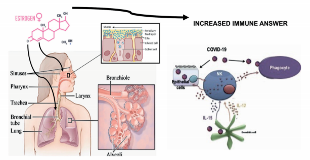 Protective effects of estrogens in COVID19