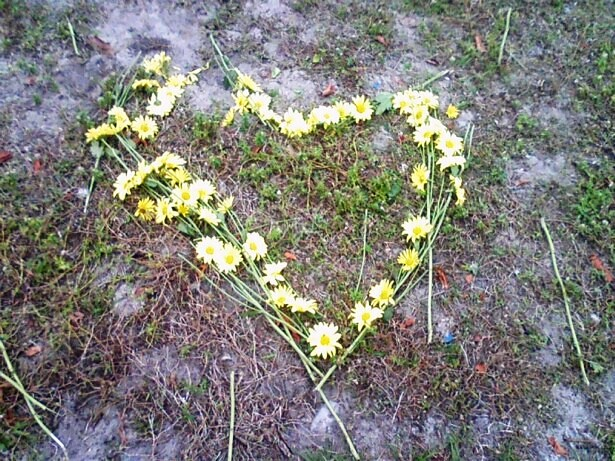 Yellow flowers arranged on the grass in the shape of a heart