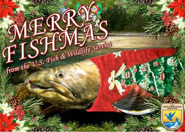 "A salmon in a Christmas sweater with the words ""Merry Christmas"" above"