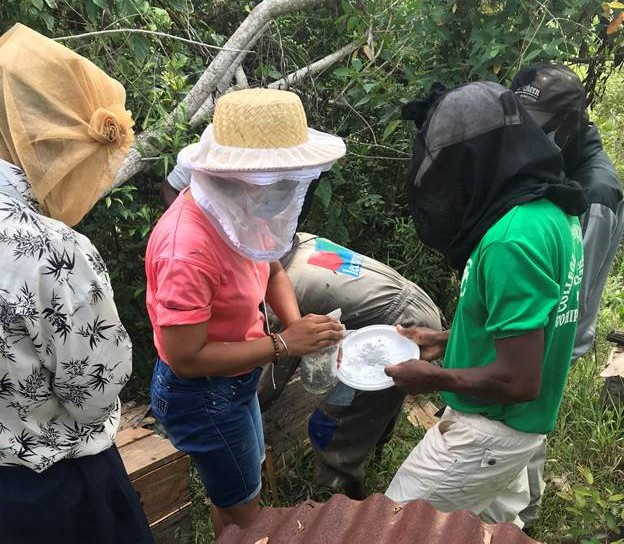 Beekeepers in the Vatovavy Fitovinany region of southeastern Madagascar