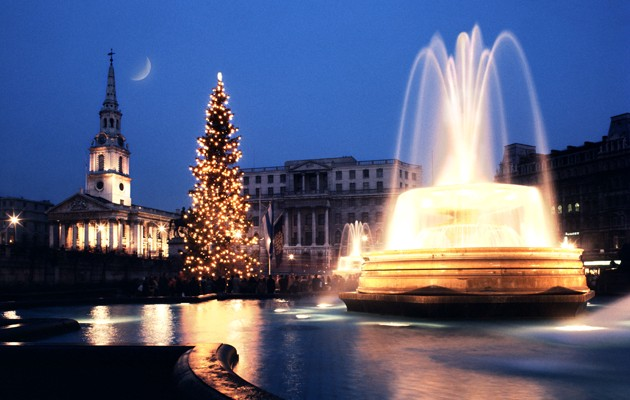Christmas Tree Not Taking Water.A Sustainable Christmas 1 To Tree Or Not To Tree Activate