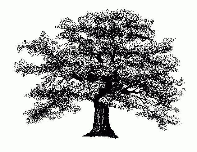 a black & white woodcut of an oak tree