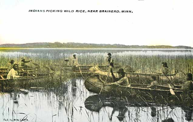 https://ojibwe.lib.umn.edu/collection/indians-harvesting-wild-rice