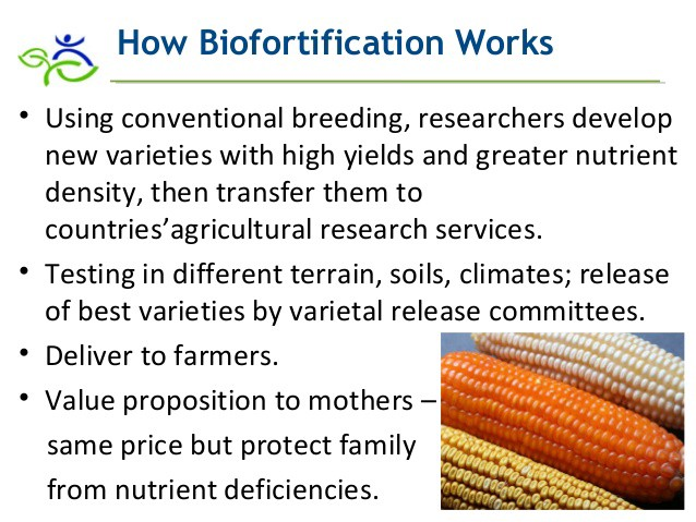 Biofortification, a Solution to Malnutrition - TheNextNorm