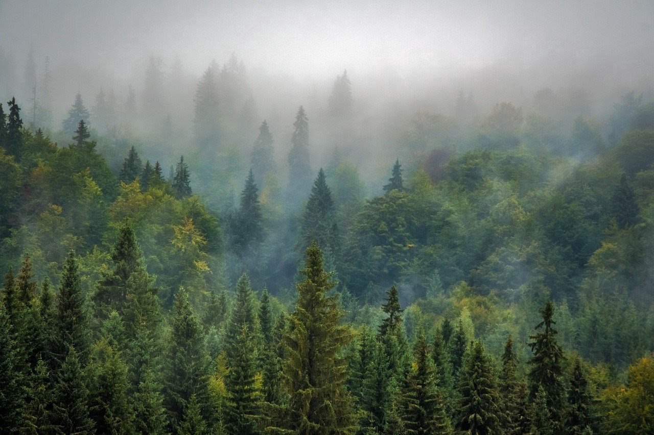 The 10 Golden Rules of Reforestation 2021