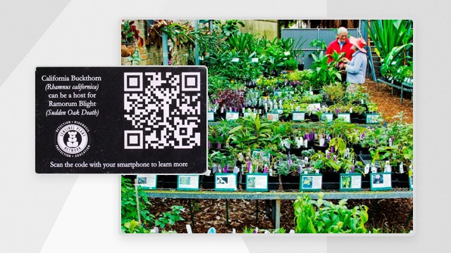 QR codes for innovative learning possibilities in the classroom