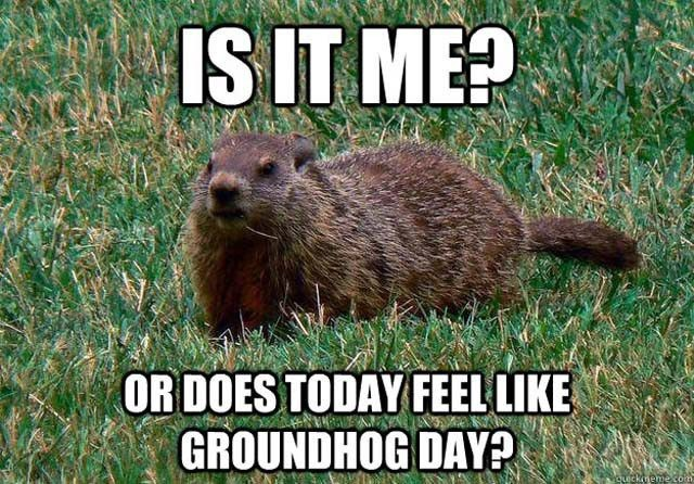 An image of a groundhog, reflecting the cyclicity of this experience.