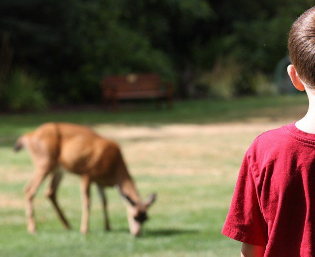A young boy watching a deer eat grass in a field