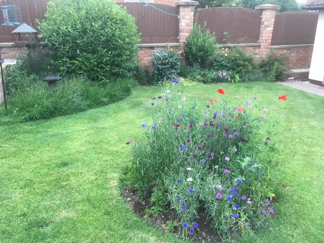 Our mini wildflower-garden with cornflowers and poppies most prominent