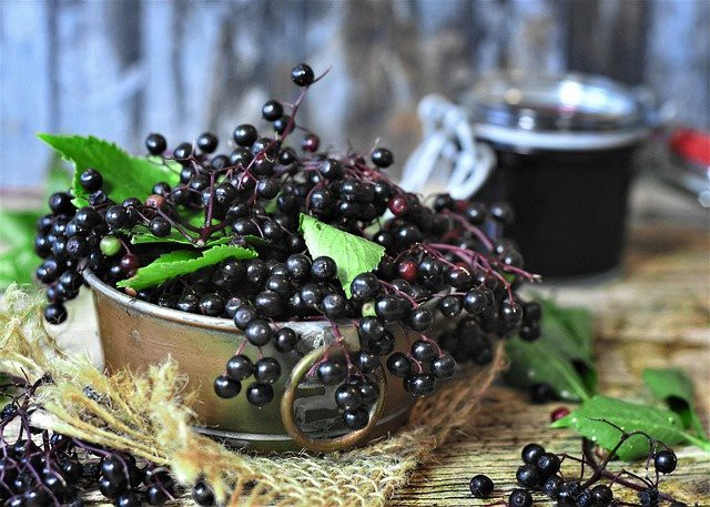 elderberries in silver bowl on table with syrup in background. Three Reasons Why Elderberry Syrup Benefits Your Winter Cold by Nancy Blackman. winter cold. health. elderberries. cholesterol. herbal medicine. herbs