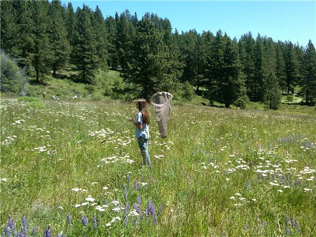The author, Megan, in a mountain meadow holding a butterfly net