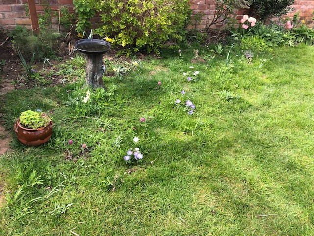 The wildflower corner comes into life with spring bulbs flowering through the new growth of grass.
