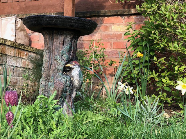 Fritillaria and narcissi in front of the bird bath—along with a strong showing of early poppy and cornflower growth
