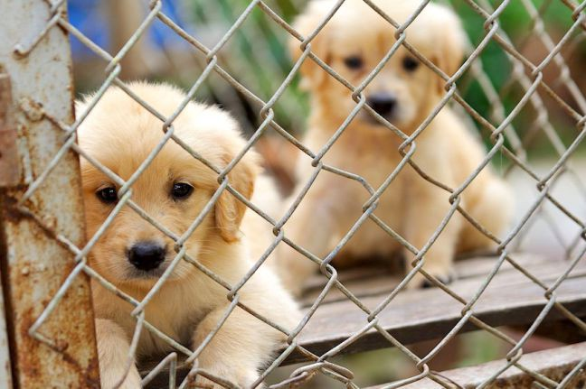 Find Animal Shelter Near Me and Animal Shelter Locations