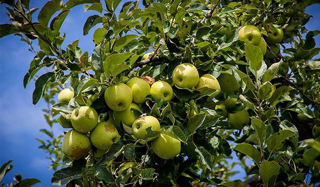 Appletree care schedule for each month