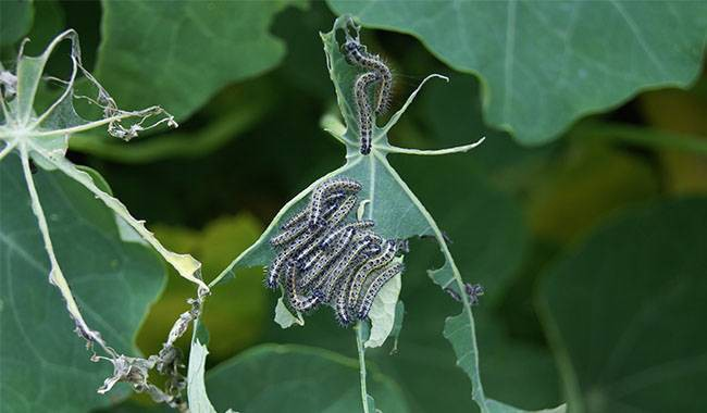 6 Of The Most Dangerous Garden Pests