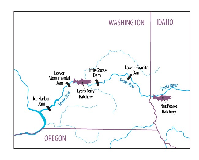 A map of Lower Granite Dam, Lyons Ferry Hatchery and the Nez Perce Hatchery.
