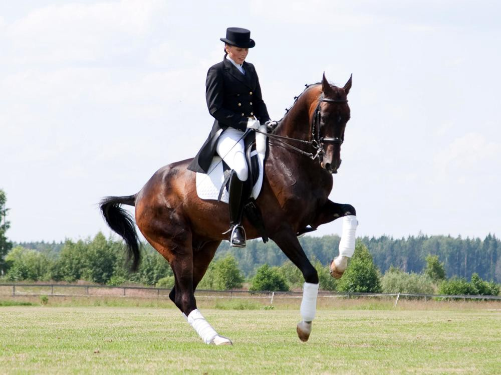 Dressage horse has the shit kicked out of him back at the stables by
