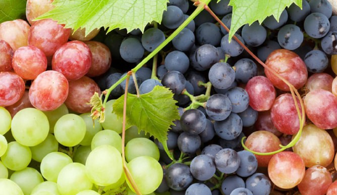 Wonderful Health Benefits of Grapes that Will Leave You Surprised!