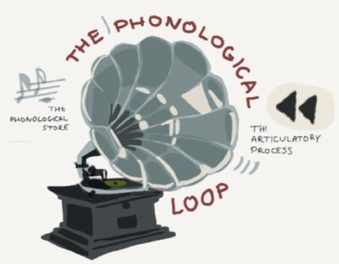 Illustration of the phonological loop.