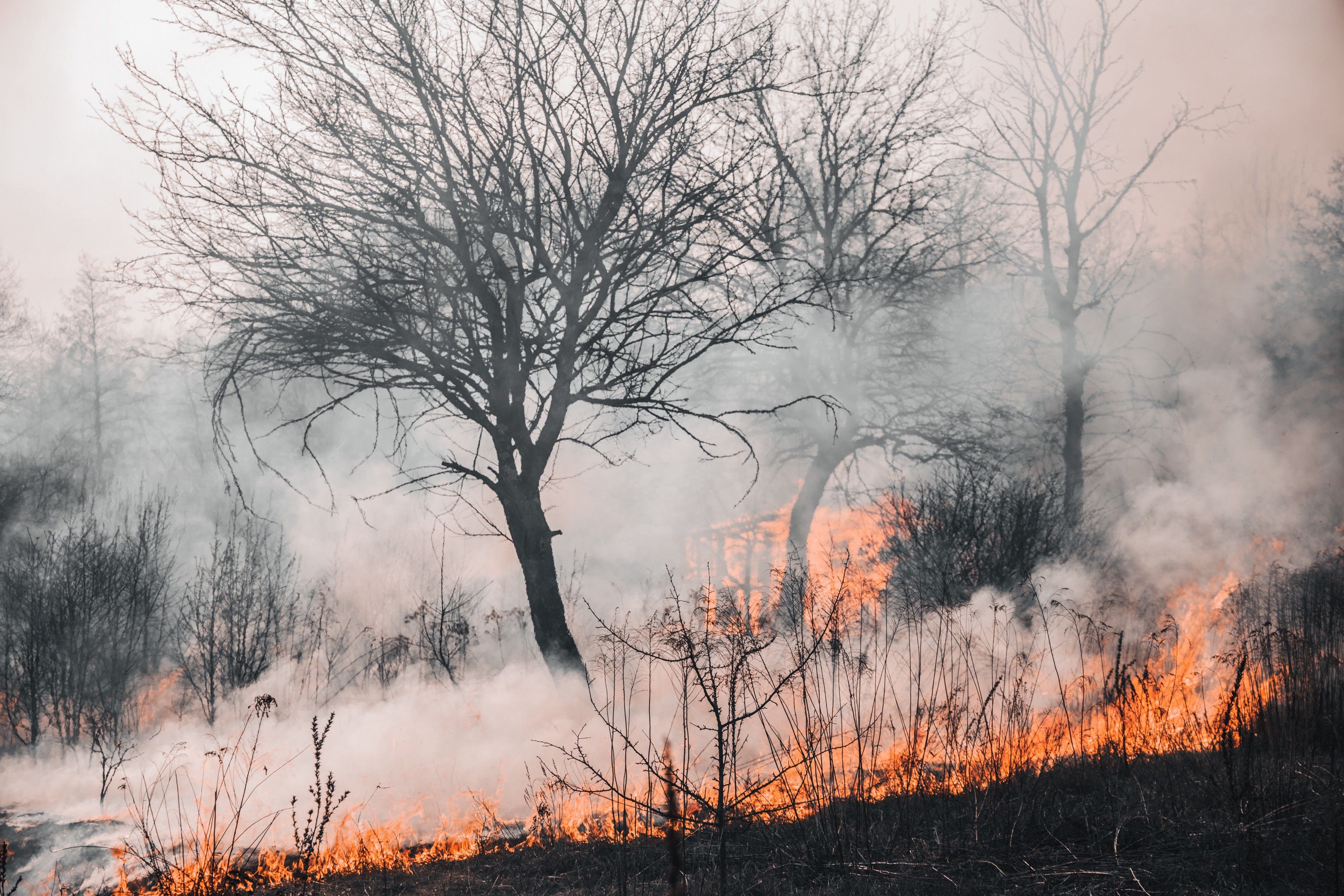 Bare tree surrounded by flames and smoke