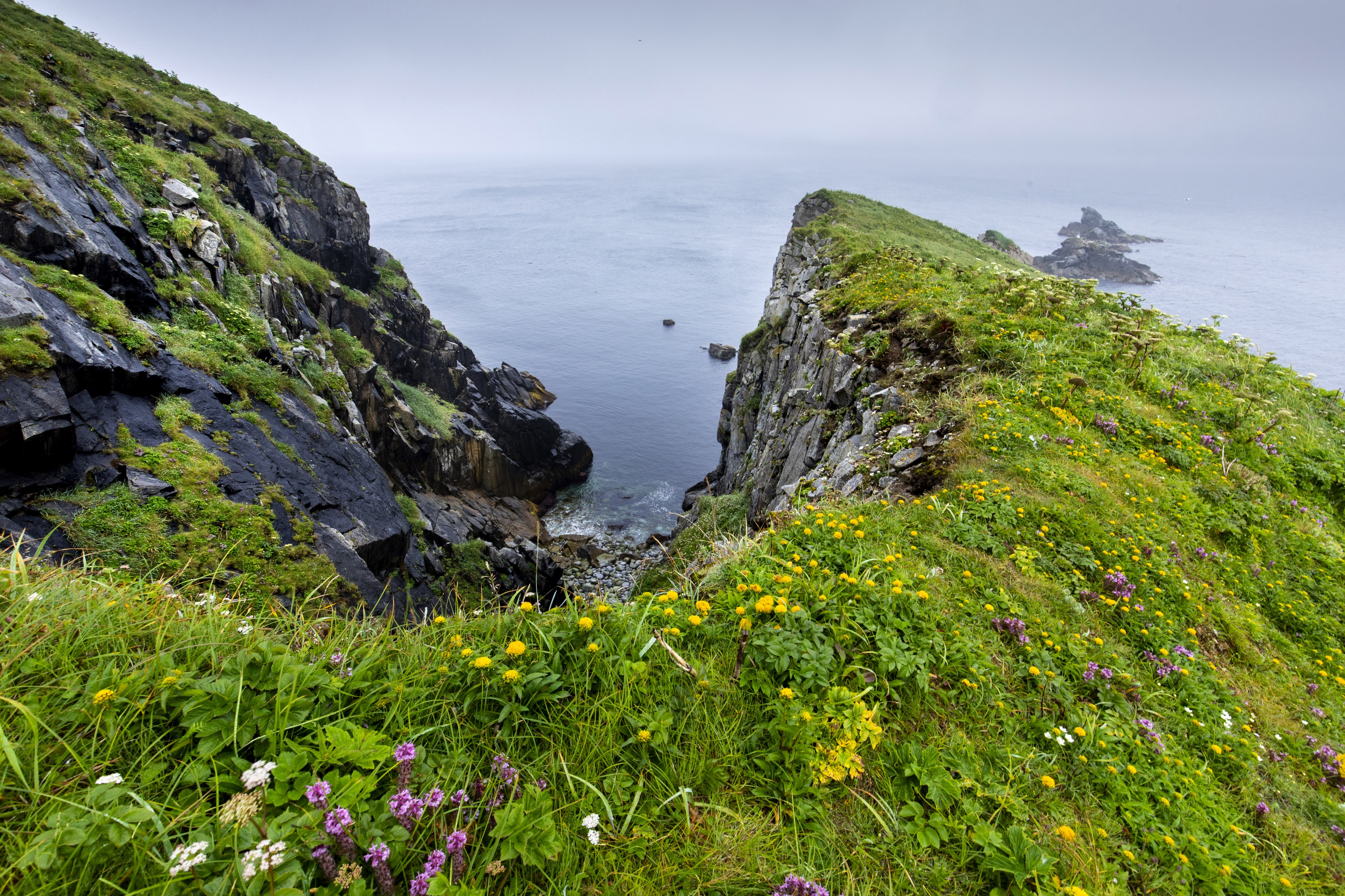 Purple and yellow wildflowers among short green vegetation grow on the edge of a rocky cliff that drops into the ocean in the background.