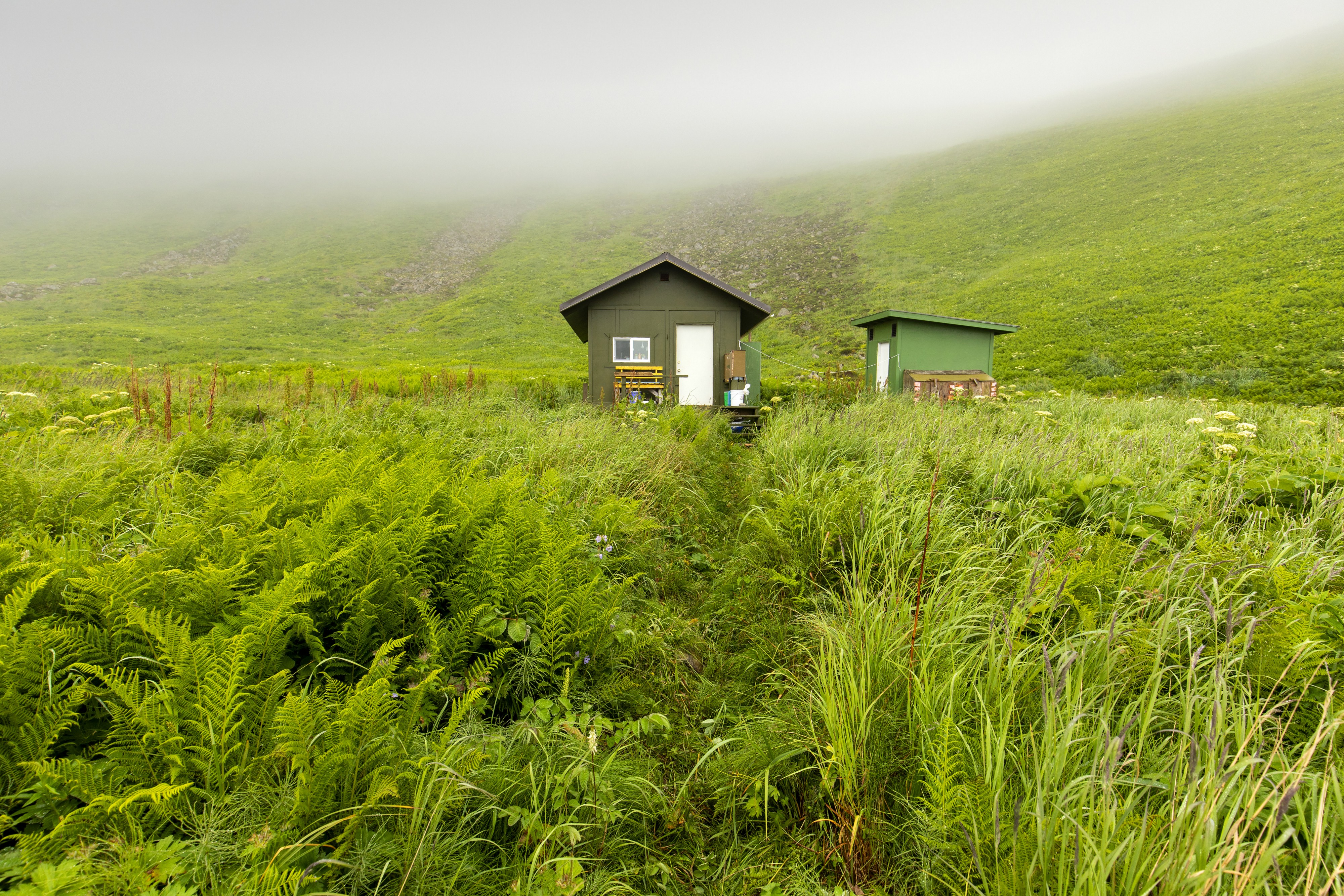 A small green cabin and outbuilding nestled in dense green grass and ferns with fog just overhead.