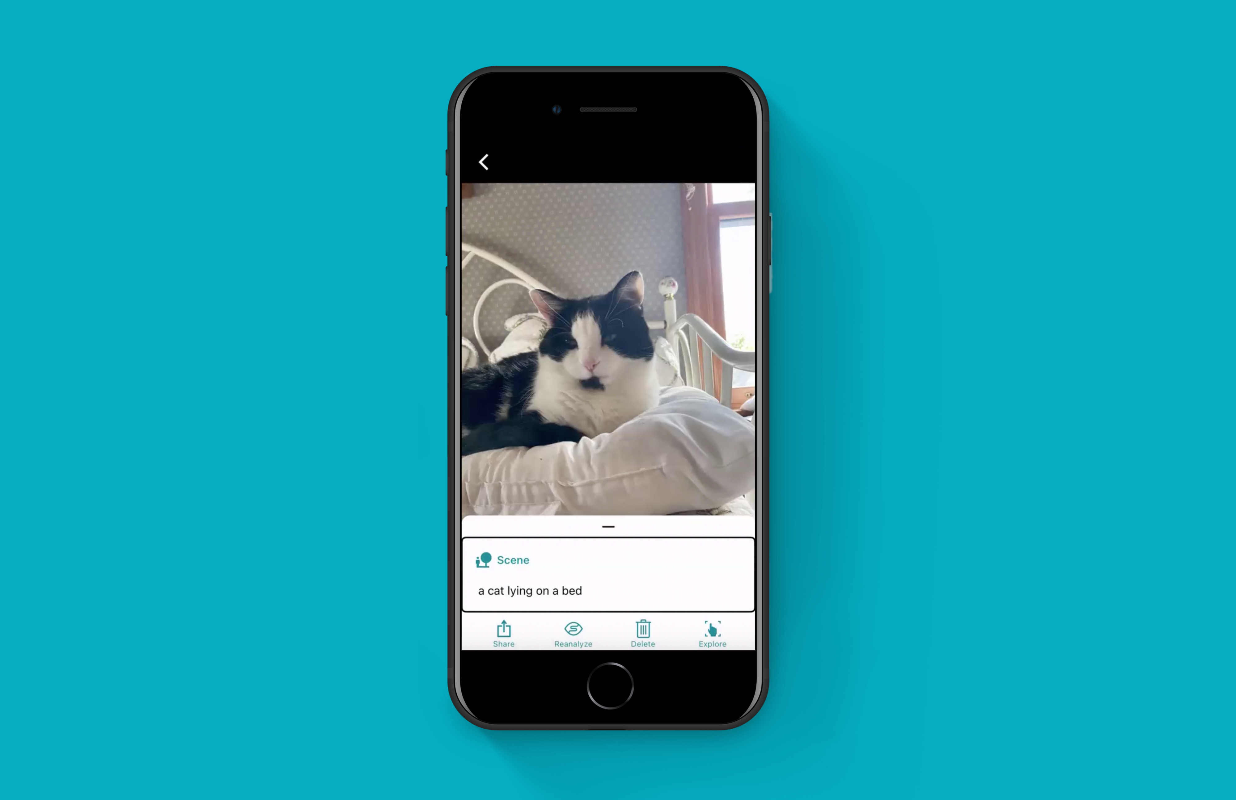 A cat captured with Seeing AI during the test sessions and described as a cat lying on the bed (correct)