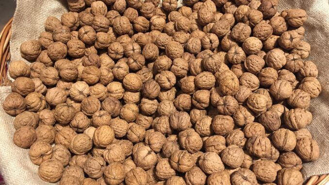 Health benefits of tiger nuts. Tiger nuts are good for digestion. Tiger nuts are good for you.
